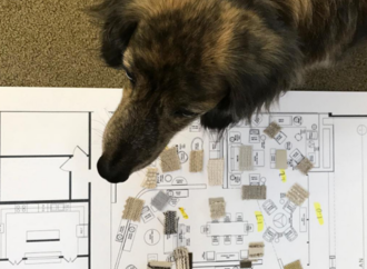 Designing a Dog-Friendly Home