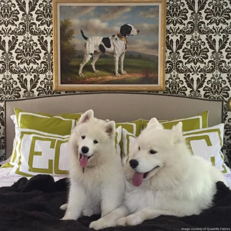 Skip The Silk When Choosing Fabrics For Your Home. Instead, Try Something  More Dog Friendly, Like Canvas Or Denim. These Make The Perfect Materials  For ... Design